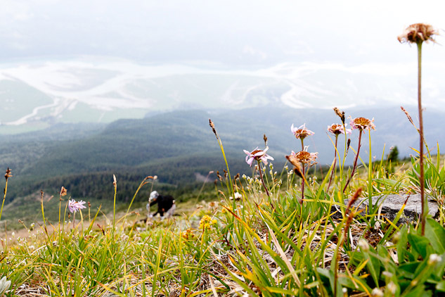 We found alpine flowers and just enough flow on this old hiking trail.