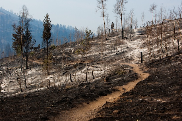 Sight lines galore on the Greenhorn Gulch area Lodgepole Trail. Nature's spring cleaning and garage sale provides opportunity for regrowth and a healthy forest. The trails just evolve.