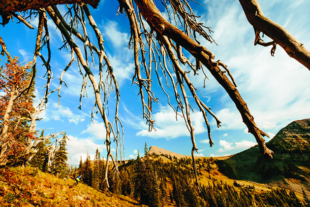 Spread out over the landscape, just like the branches on a tree, are the endless trails of Jackson Hole.