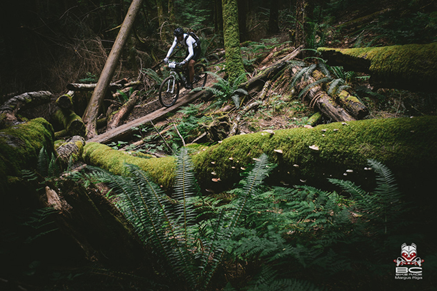 The trail turns downward  and manmade features meld into the lush green forest. | Photo by Margus Riga