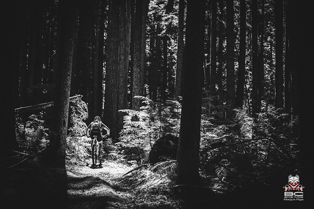 Sunlight dapples through the trees. | Photo by Margus Riga