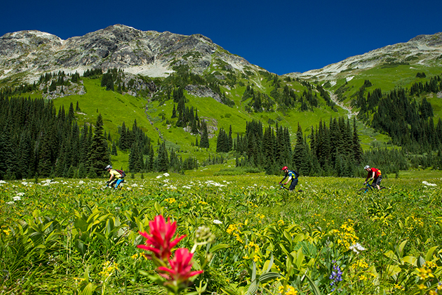 Midway through the descent, the steep slopes gave way to a sprawling alpine meadow, and the promise of all the descending ahead didn't stop NSMB's Pete Roggeman and the author from cruising along to enjoy the daffodils.