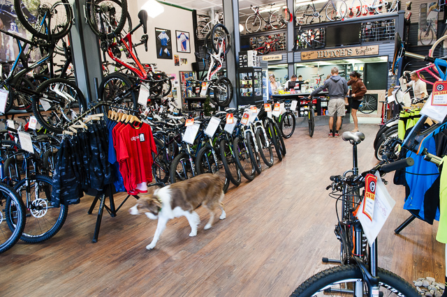Hutch's Bicycles has the largest rental fleet in Central Oregon and a really cool shop dog. PHOTO: Keith Carlsen
