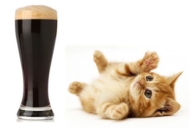 Beer is not to be feared. Loved? Yes. Worshipped by kittens? Devoutly. Beer demands your respect and admiration.