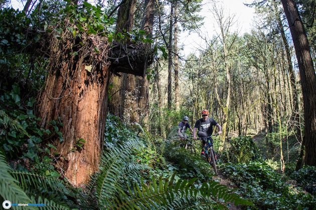 """River View may not have been a """"mecca"""" of mountain biking, but it's roughly 7 miles of singletrack were just about all that Portland riders could call home."""