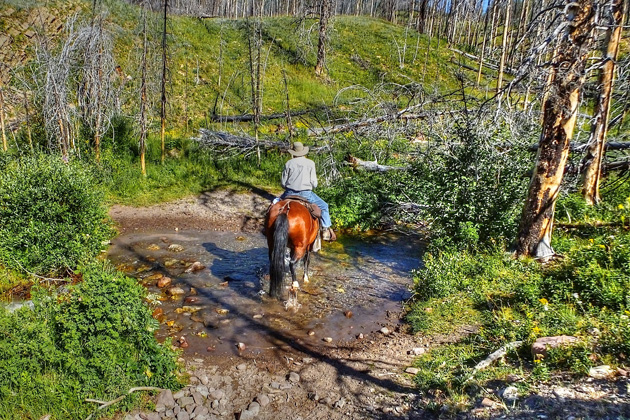 Mountain bikers are getting kicked out of several Wilderness Study Areas in Montana, but it's more than okay to ride your horse pretty much wherever the hell you want to in Montana's wilderness. That's sound science at its best...