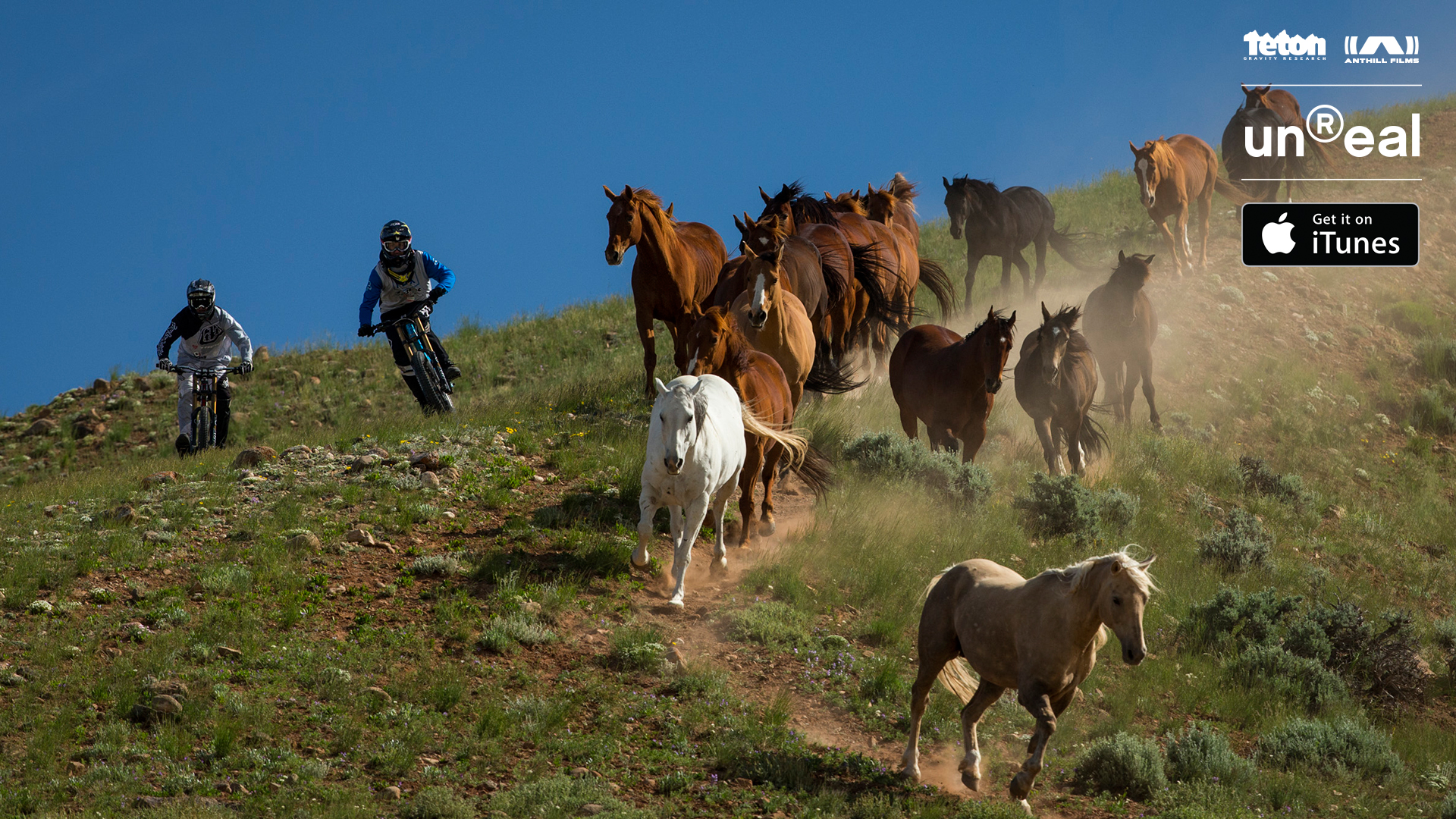 tgr-anthill-unreal-pr-images-bikers-with-horses